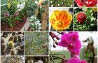Naravoslovni dan za šestošolce v Arboretumu Volčji Potok
